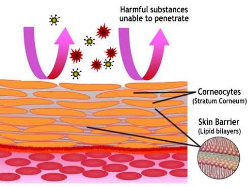 Restored Skin Barrier
